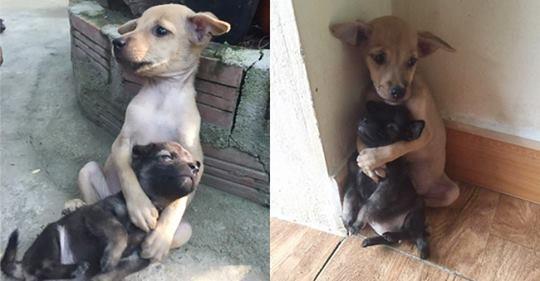 Sokaktan Kurtarılmalarına Rağmen Sarılarak Birbirini Koruyan Köpekler