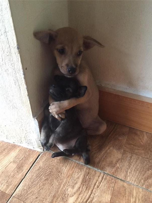 İki minnoş ve tatlı köpek Çin'in kalabalık sokaklarında birlikte yaşıyorlardı..