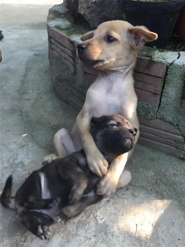 Artık güvenli ellerde olsalar da bu iki yavrudan büyük olanı küçüğe sürekli sarılıp onu sarılmak istiyor..