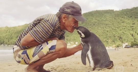 Her Sene 8000 km Yüzüp Kendisini Kurtaran Balıkçıya Ziyarete Gelen Penguen Dindim