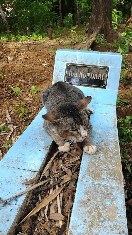 Bu tatlı kedi, 1 yıl önce ölen sahibinin mezarının başından bir an olsun bile ayrılmıyor.