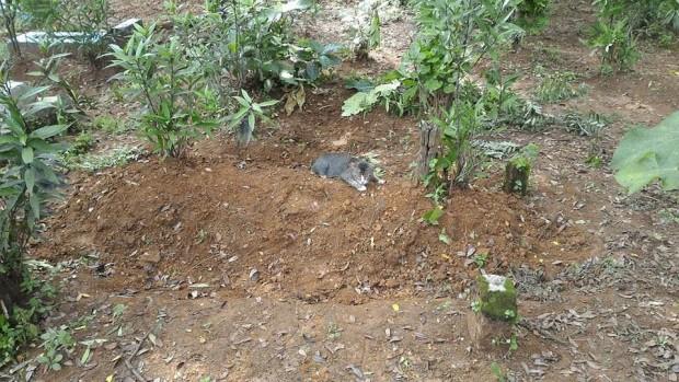 Kedicik ölen yaşlı annesinin mezarından başından bir yere kıpırdamak istemiyor. Orada uyuyor, ağlıyor ve ondan başka hiç kimsenin yanın