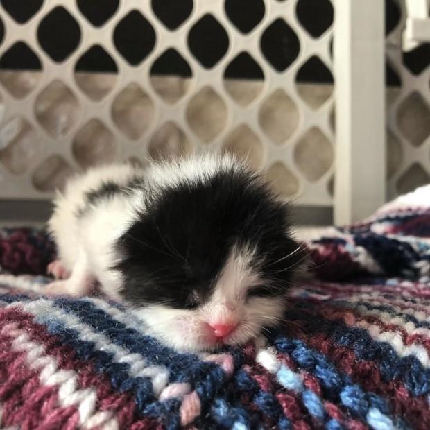 """Melinda: """"Bana geldiğinde henüz bir haftalıktı ama kilosu yeni doğmuş ya da bir günlük kedi yavrusu kadardı."""""""