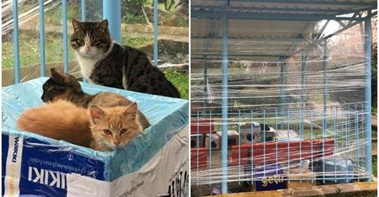Sitelerinin Çardağını Kedi Barınağına Çevirip Sokak Kedilerini Mutlu Eden Güzel İnsanlar