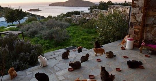 Hayalimizdeki İş: Deniz Manzarasına Karşı 55 Kediye Bakıp Maaş Alabilirsiniz