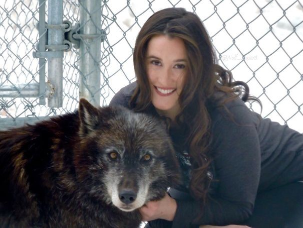 Bu kadın 6 yıl önce kurtlarla yapılan bir terapi şeklini geliştirmiş ve bir merkez açmış.