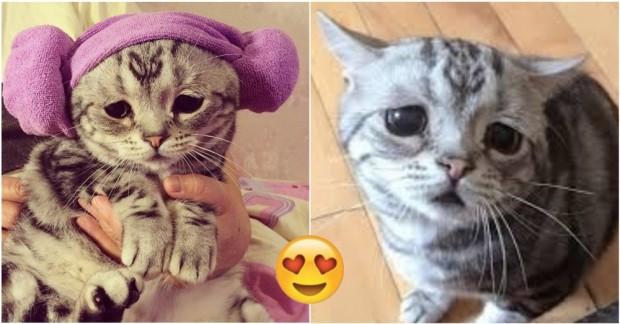 Bakınca Kıyamayacağınız 13 Minnoş ve Üzgün Kedi
