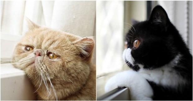 Sahiplerinin Geri Dönmesini Pencerede Bekleyen Melankolik Kediler