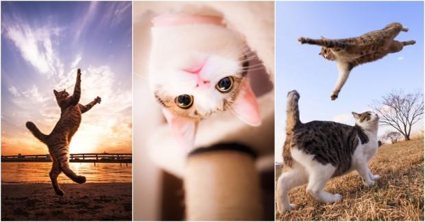 Japon Fotoğrafçı Kedilerin Dünyasını Büyüleyici Bir Güzellikte Yansıtıyor