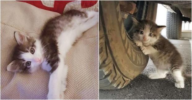 Adam Kamyonun Altında Korkmuş Bir Kedi Yavrusu Buldu, Karısına 'Onu Eve Getirebilir miyim?' Diye Sordu