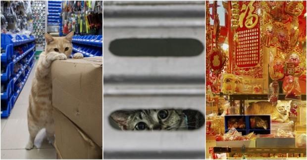 Hong Kong Mağazalarında Yaşayan Kedilerin Gizli Yaşamlarını Konu Alan İlginç Kareler