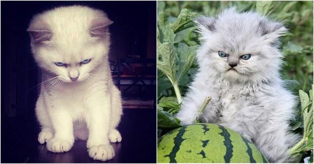 İşte her göreni şaşırtan sinirli ve atarlı kediler!