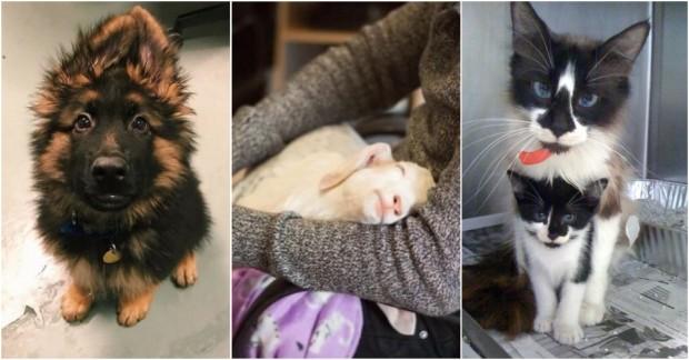 Hayvanlarla Çalışan Kişilerin Paylaştığı Sevimli Fotoğraflar