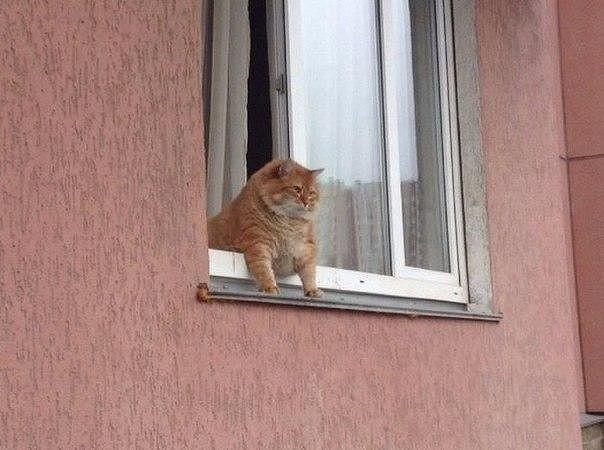 Kediler Aleminde Bugün