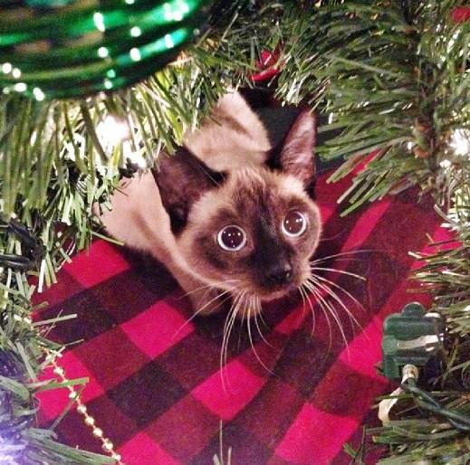 Galerideki ileri butonuna tıklayarak siz de bu tatlı kedilerin yeni yıl geldiğinde yılbaşı ağaçları ile olan ilk karşılaşma anlarını gö
