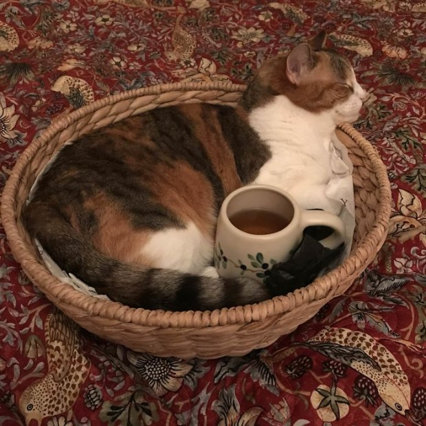 Göbeğime sıcak su torbası istedim, sıcak fincan geldi. Olsun o da olur!