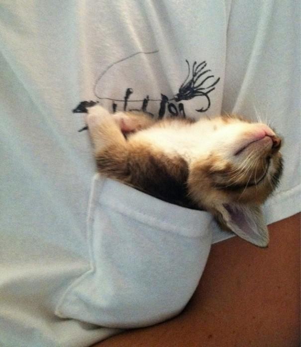 12. İşte diğer muhteşem uyuyan kedi fotoğrafları...