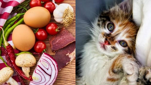 Galerideki ileri butonuna tıklayarak kedilere verilmemesi gereken yiyecekleri öğrenebilirsiniz.