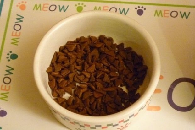8. Köpeklere kedi maması verin