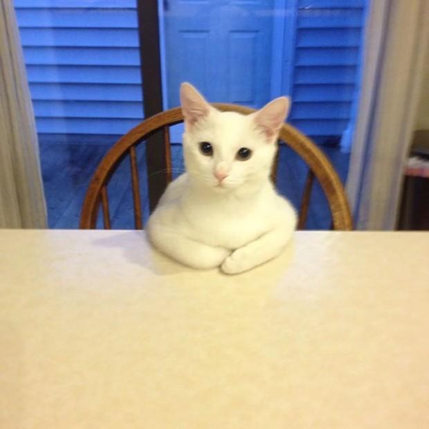 Evet yemeği bekliyorum lütfen!