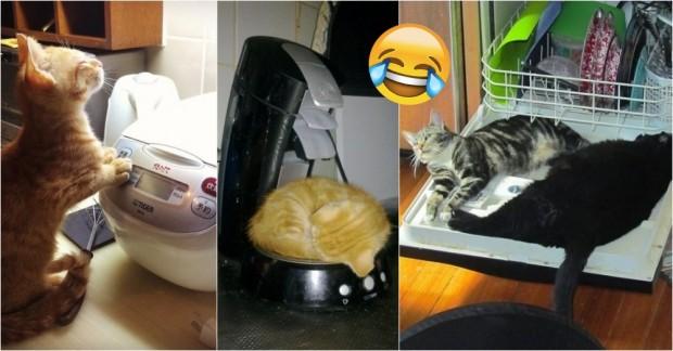 Konu Yemek Olunca Kedilerin Kendilerinden Geçtiğinin 17 Kanıtı