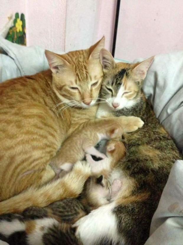 Onlar şimdi minnoş ve büyük bir aile!