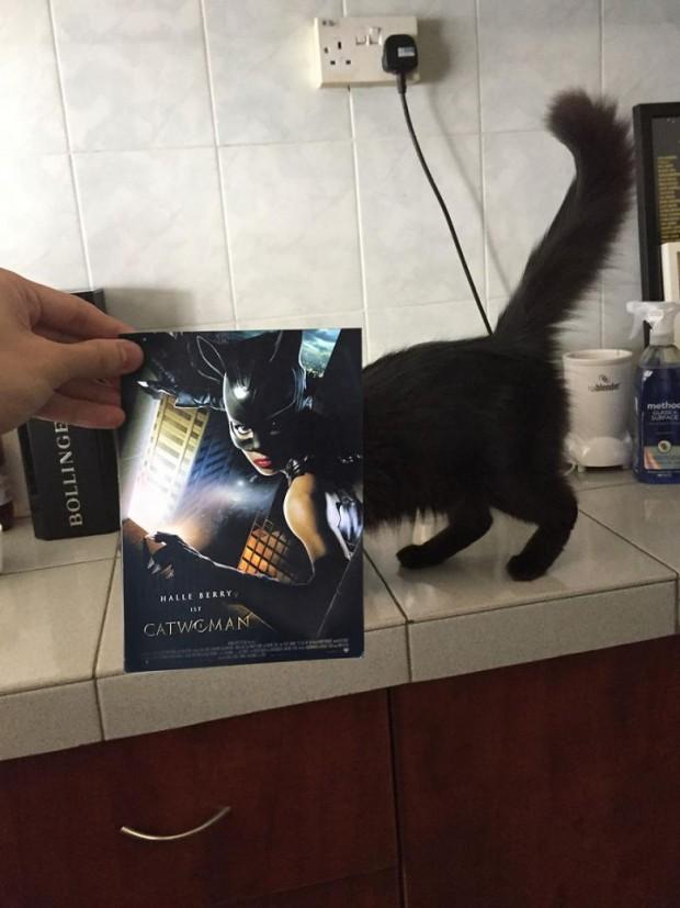 Kedi Kadın (Catwoman)