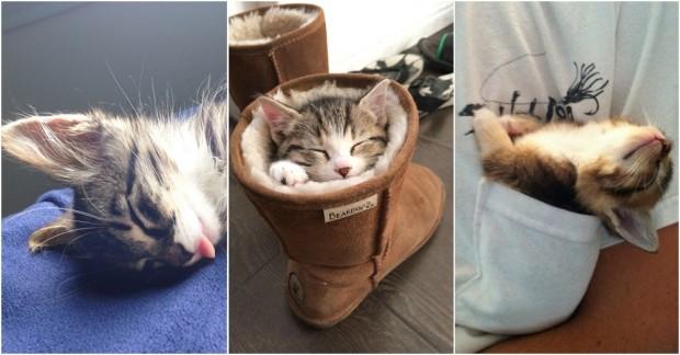 Olur Olmaz Yerlerde Uyuyan Kedilerin Usta Birer Uykucu Olduğunu İspatlayan 22 Minnoş Kedi