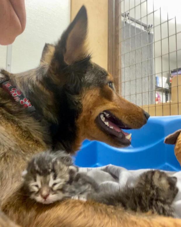 Bunun üzerine Georgia'nın acısını biraz da olsa hafifletmek isteyen gönüllüler ona yavru köpekler bulmayı dene